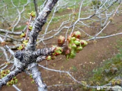 Cerezos en flor; Valle del Jerte; parque nacional madrid senderismo en picos de europa rutas de viaj